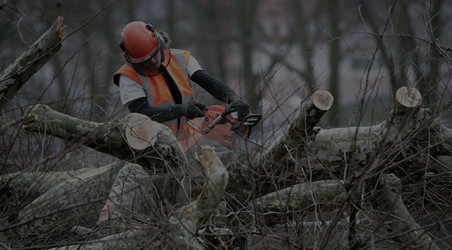 Greenwich CT Tree Service