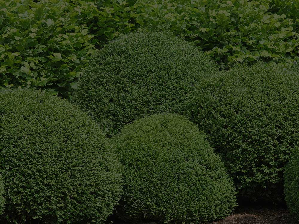 Greenwich CT Shrubs and Hedges