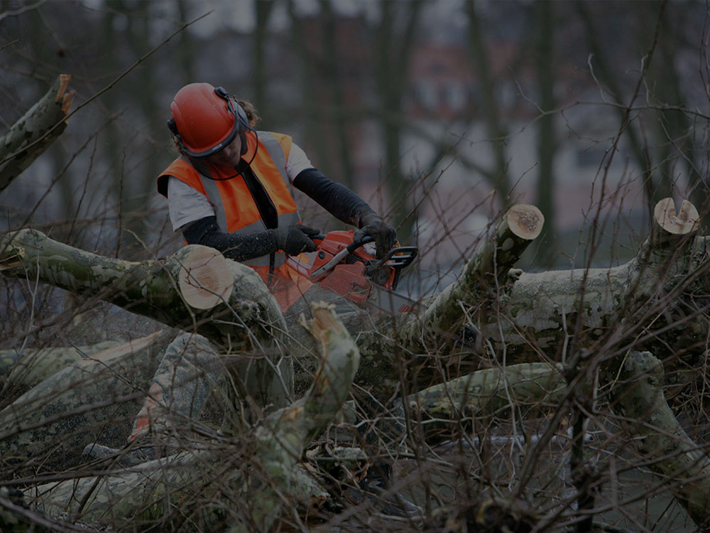 Westchester County Tree Removal